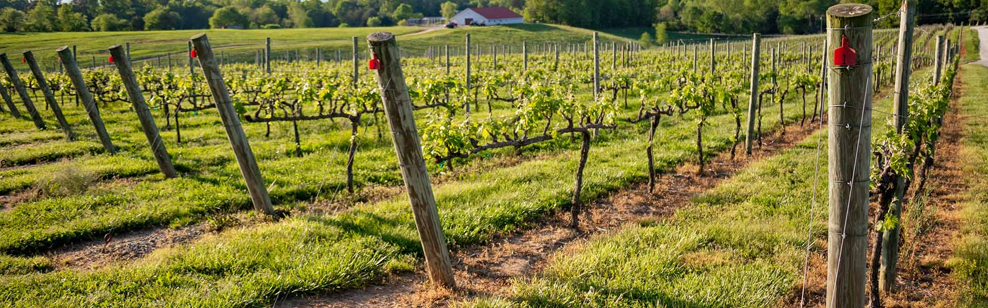 Yadkin Valley Winery
