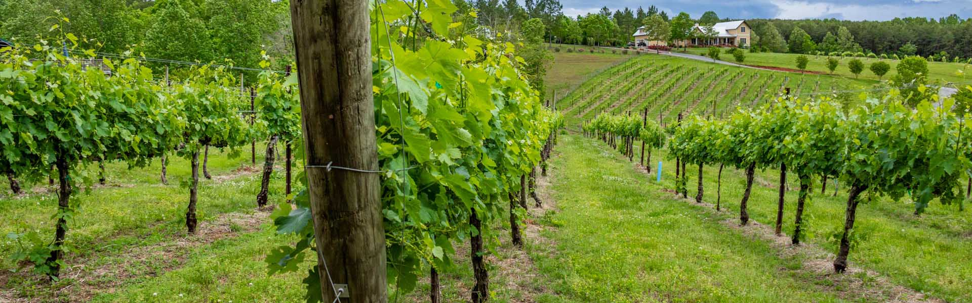 Tryon Foothills Winery