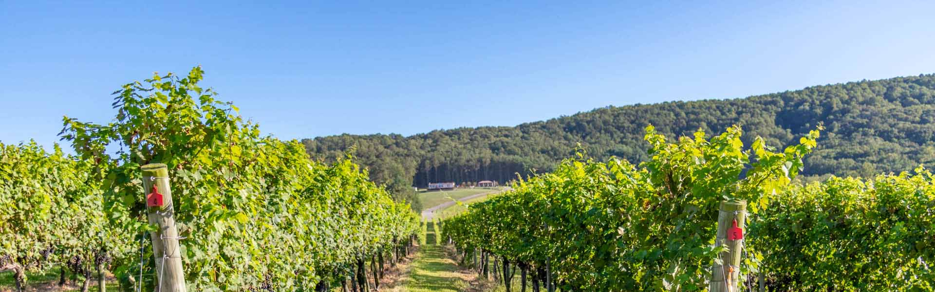 North Carolina Wineries